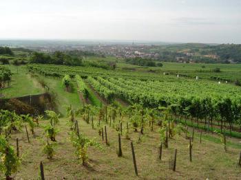 Retz - krásné vinařské městečko - Retz