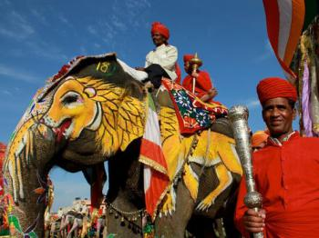 Indie - indický slon